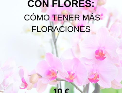 TALLER PLANTAS DE INTERIOR: COMO TENER MÁS FLORACIONES